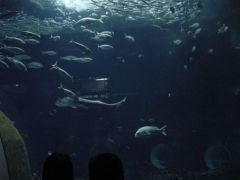 マリンピア日本海