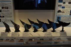 沖縄美ら海水族館の視察記録