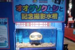 おもしろ水族館の視察記録