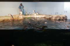 アクアパーク品川の視察記録