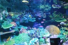 サンシャイン水族館の視察記録