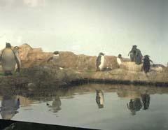 マクセルアクアパーク品川